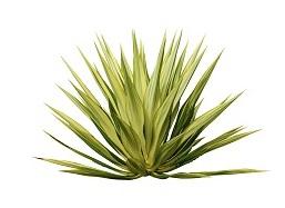 pure via agave